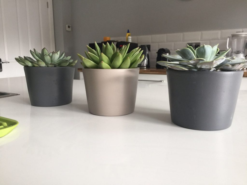 Sprucing up our kitchen with new plants