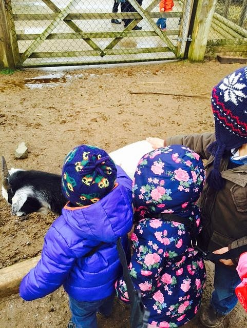 Half term adventures – Twycross Zoo
